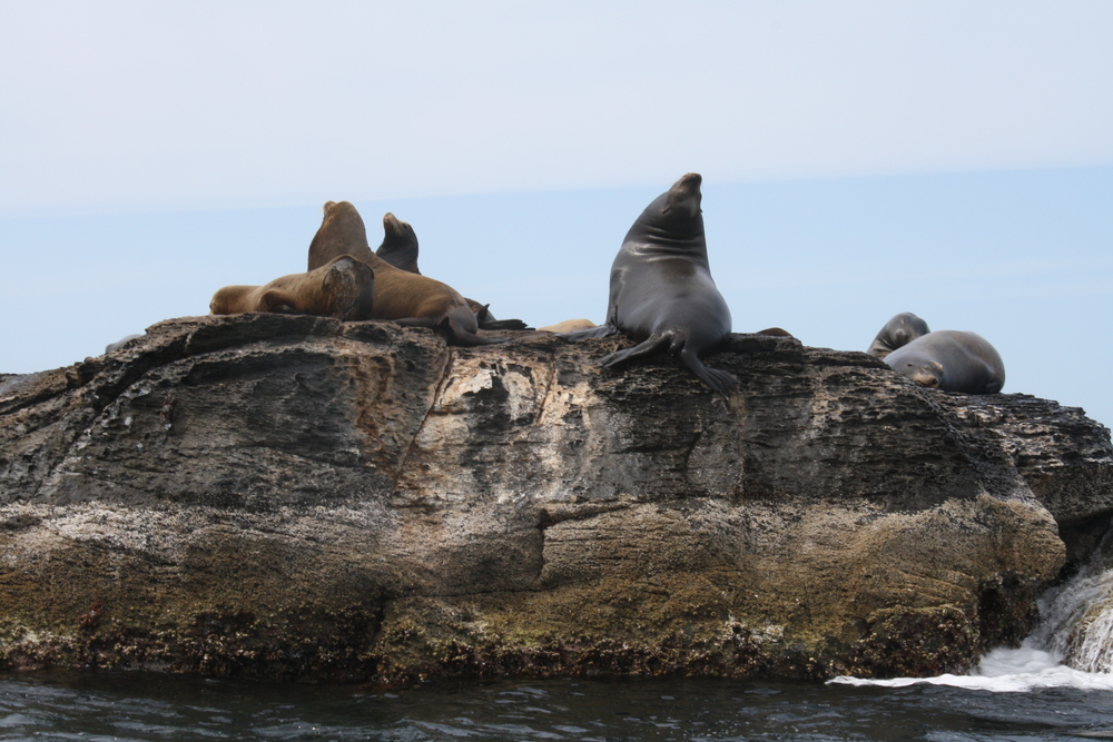 Sea Lions in the Loreto Bay National Marine Park