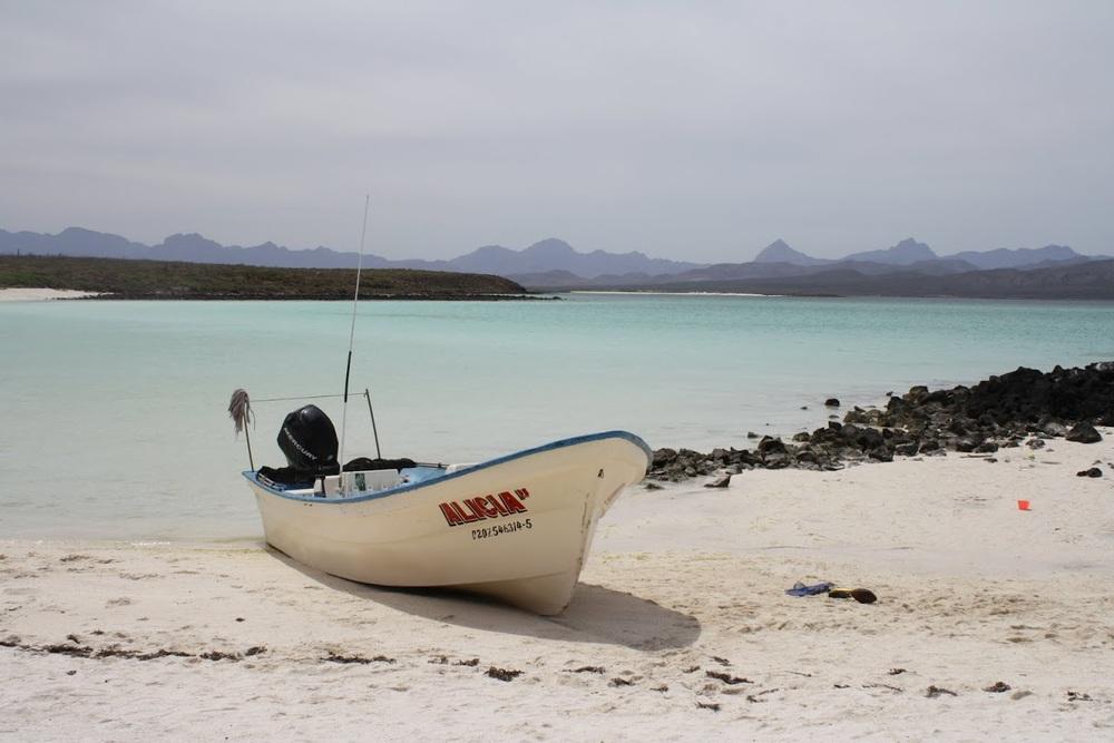 Panga boats await for whatever adventure you choose