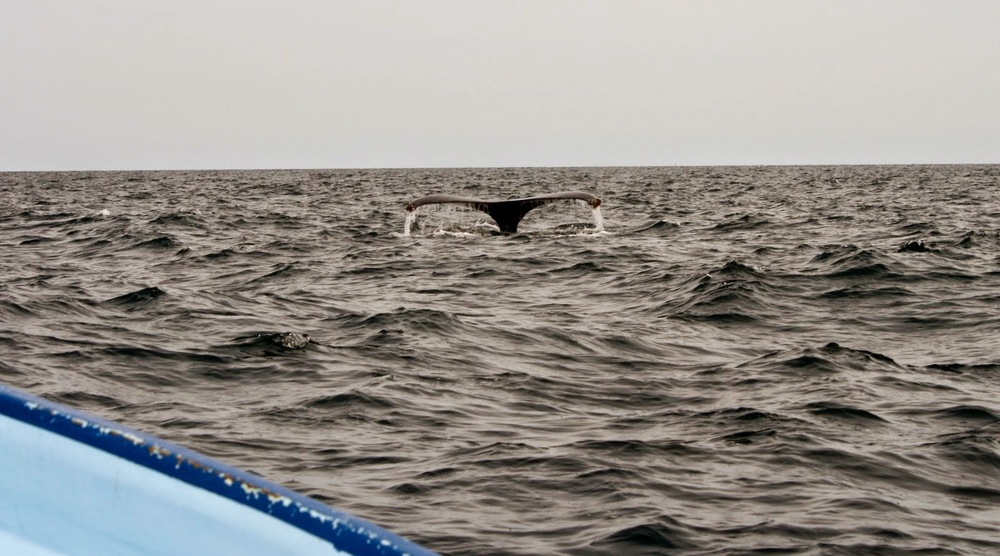 Whales spotted in March in Loreto, Mexico.