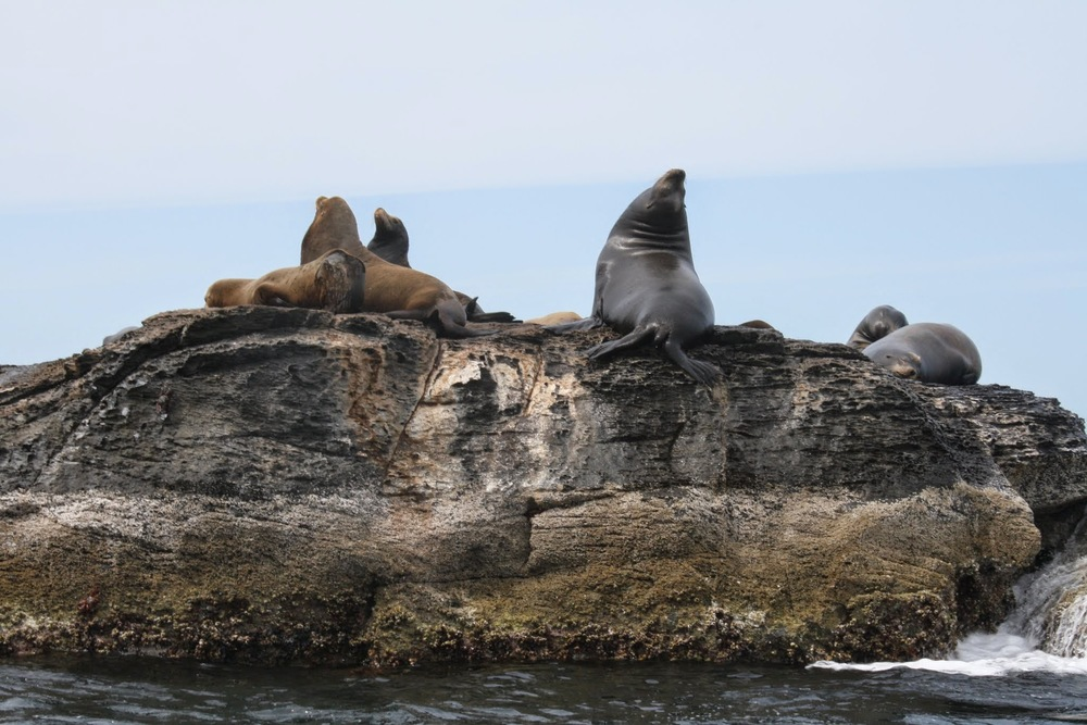 Passing by the sea lions in Loreto, Mexico!
