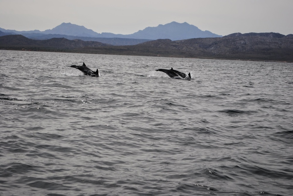 And then we found dolphins on the way back to Loreto Bay!