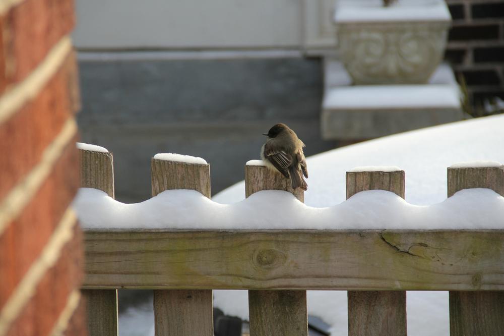 A lone, fuzzy baby bird