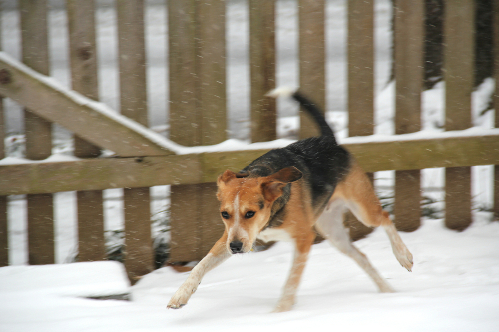 That's some action shot! Watson is already a pro after his first experience with snow.