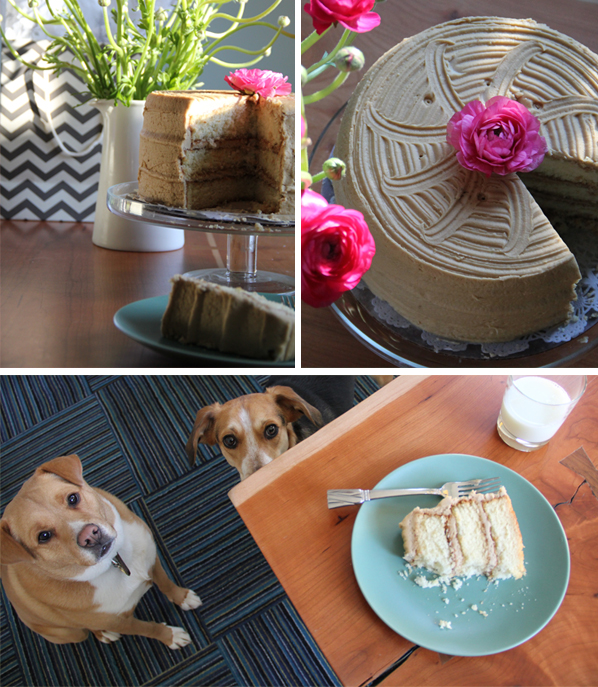 cake and dogs