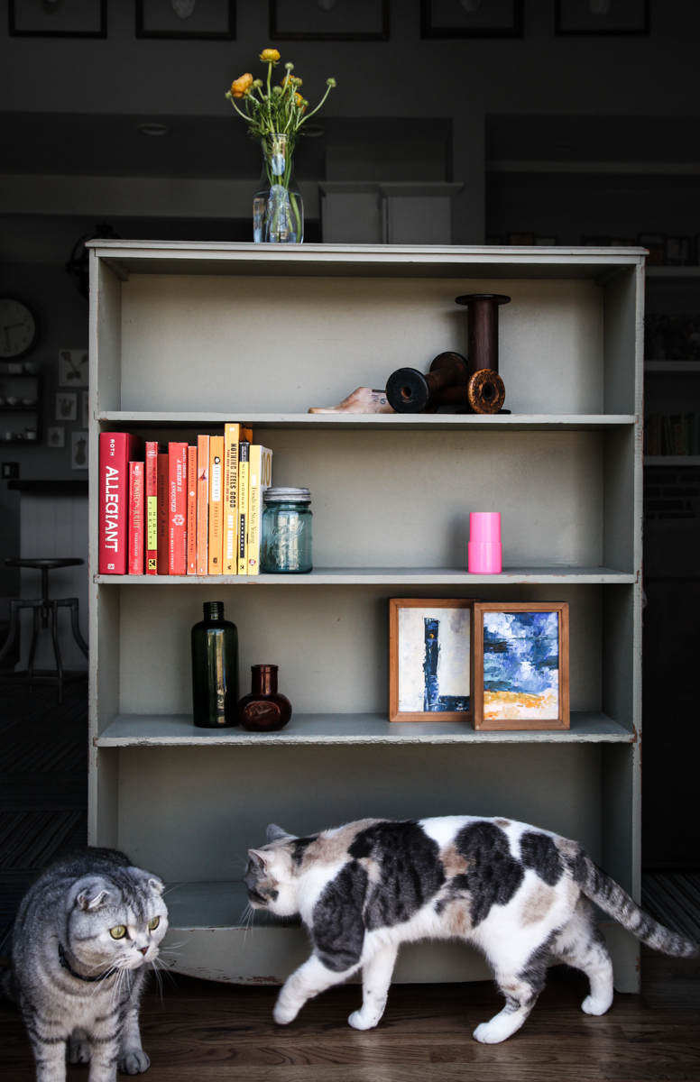 green-bookcase-cats