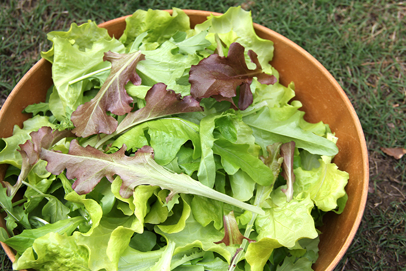 vegetable-garden-lettuce