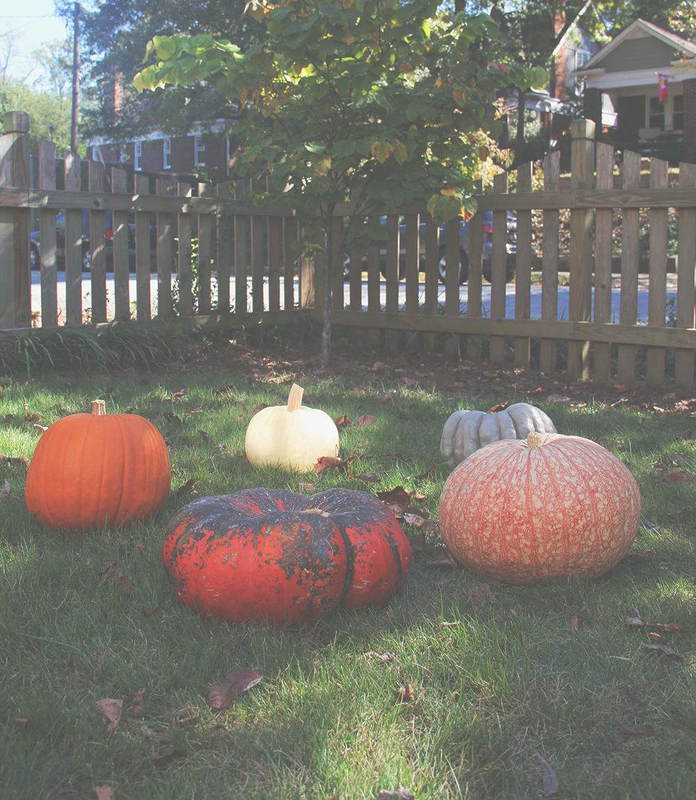 jotorrijos-jo-torrijos-asimplerdesign-pumpkins--1.jpg