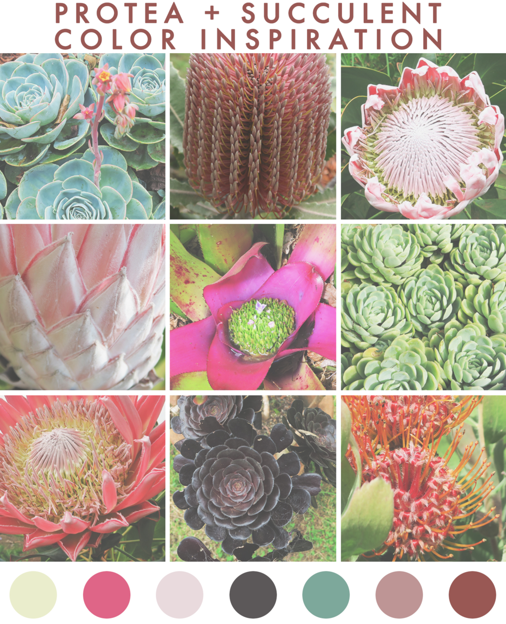 jo-torrijos-a-simpler-design-color-inspiration-nature-succulents-protea-maui-10.jpg