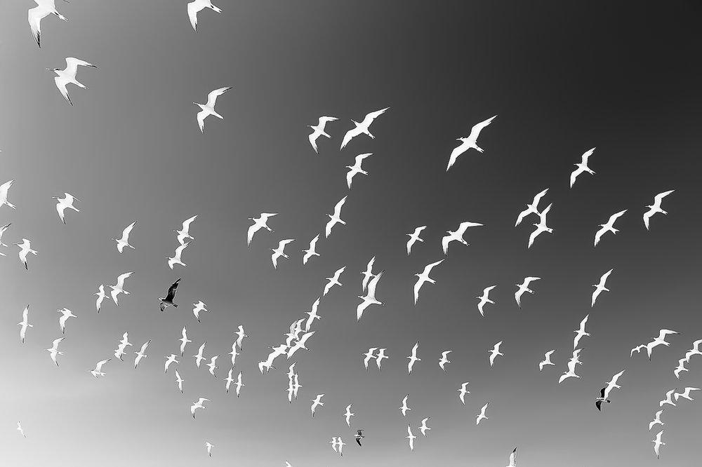 Birds-b&w.jpg