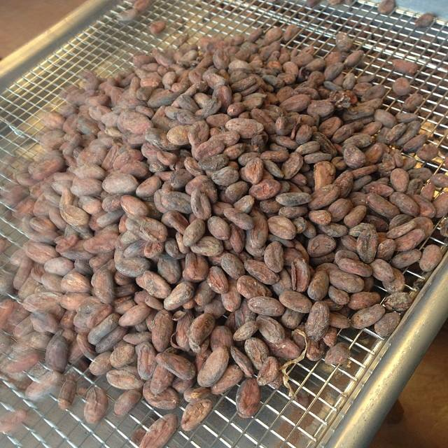 Sorting through the beans