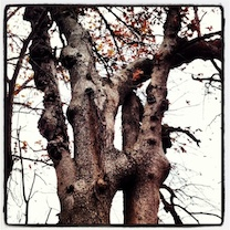 Knotty Oak copy.jpg