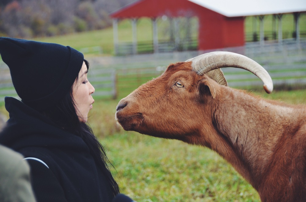Racecar the goat