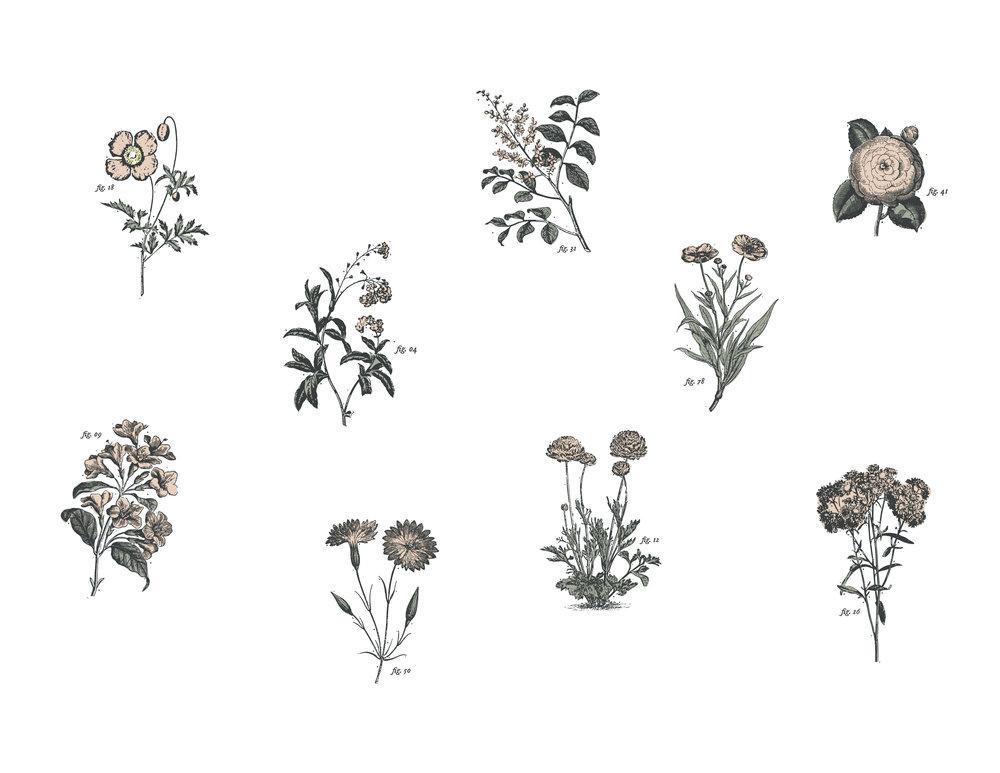 Brand-Concept_Artboard 4.jpg