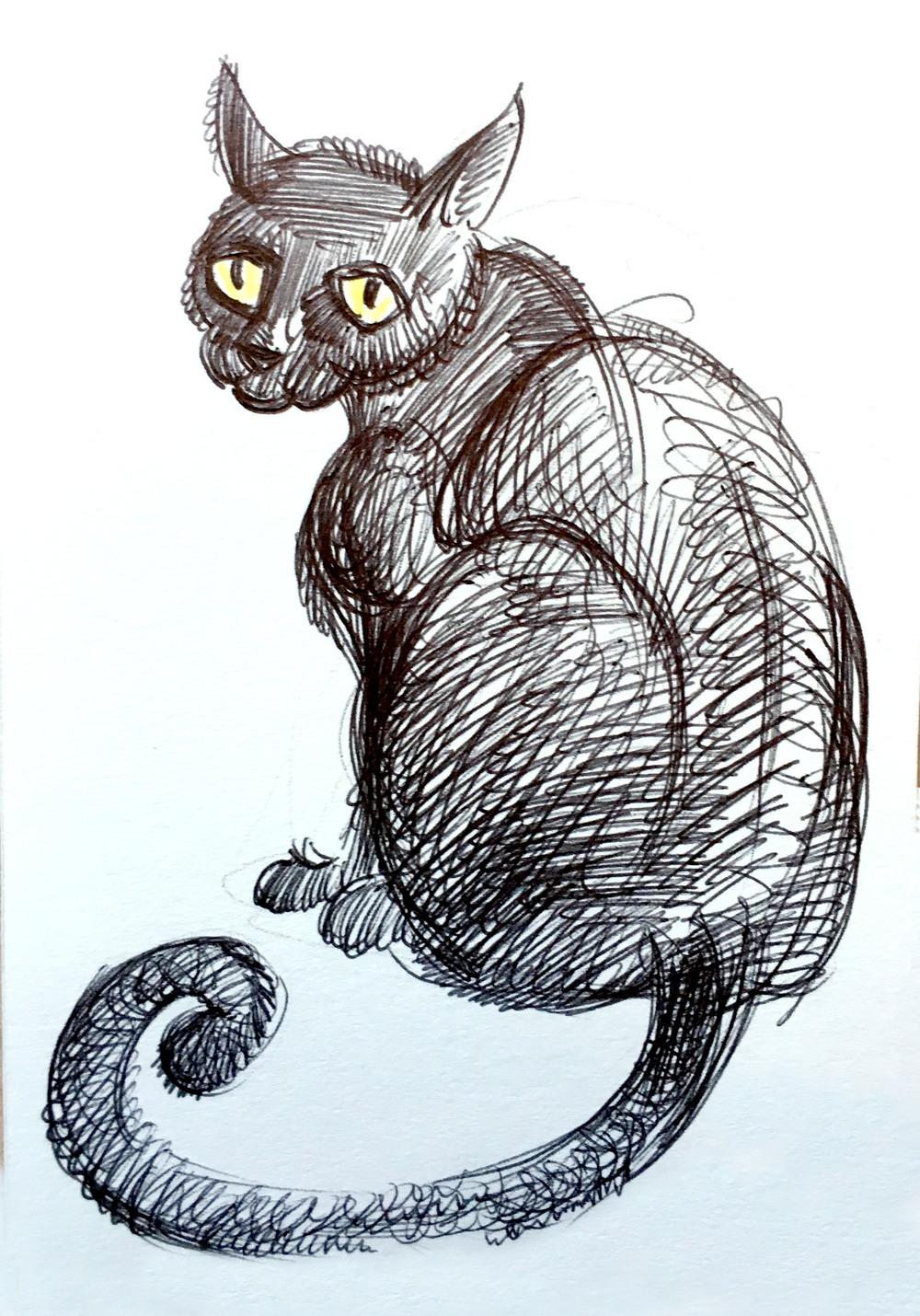 gatto_04.jpg