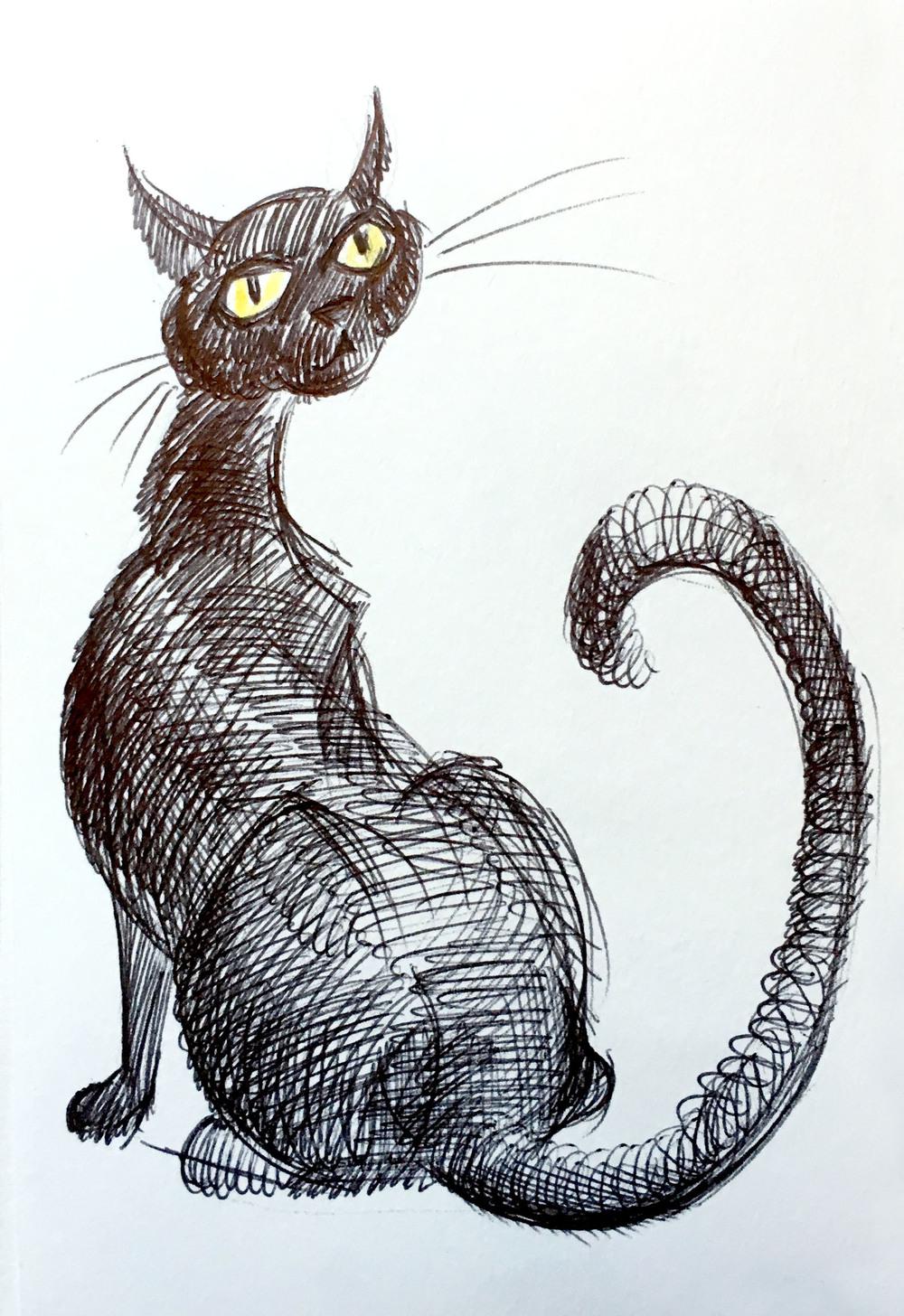 gatto_05.jpg