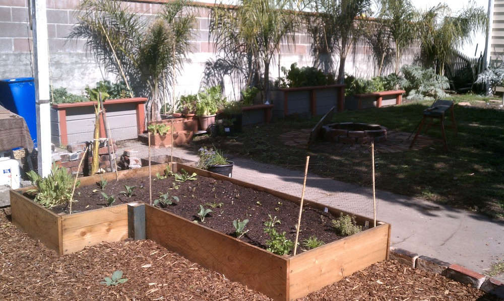 Newly Constructed and Planted Raised Veggie Bed