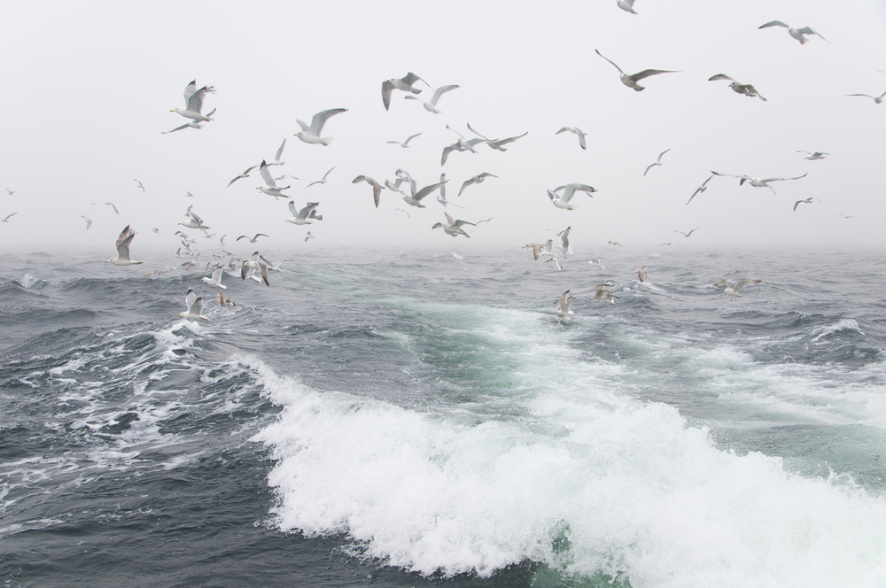 Torskefiske-hav.jpg