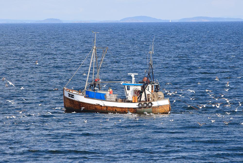 Fjordfisk Hvaler