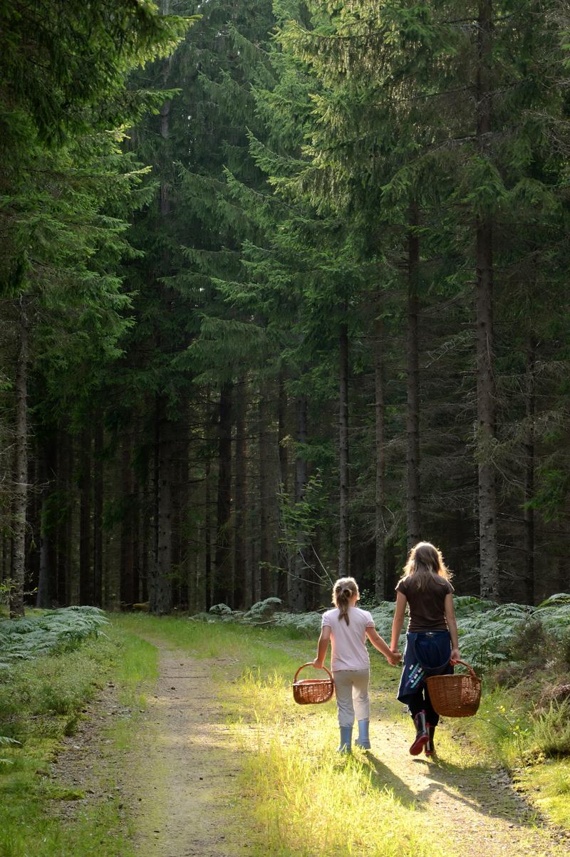 skogens-mystikk-og-sopptur.jpg