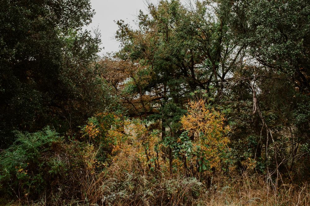 005-alaamarzouk-alaamarzoukphotography-mcallenweddingphotographer-boerneweddingphotographer.jpg