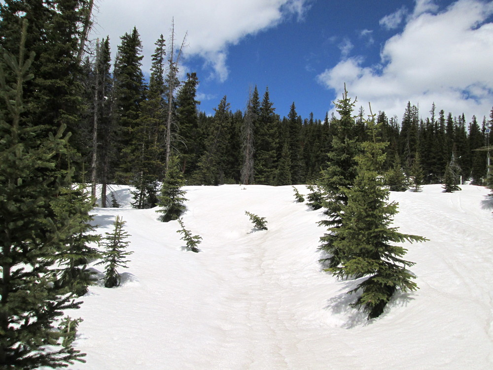 Berthoud Pass CODOS sample area.  Higher concentrations of dust are seen in slight depressions of the snow surface.