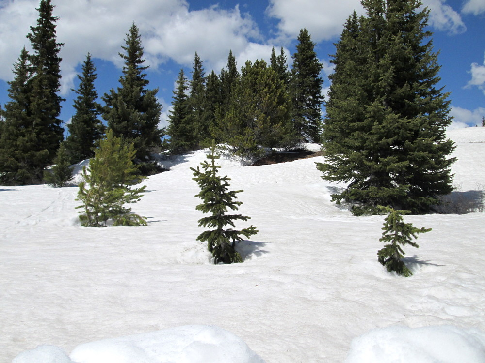 Photo of Hoosier Pass CODOS sample area.  The cleaner blocks from the snow pit can be seen in the foreground.