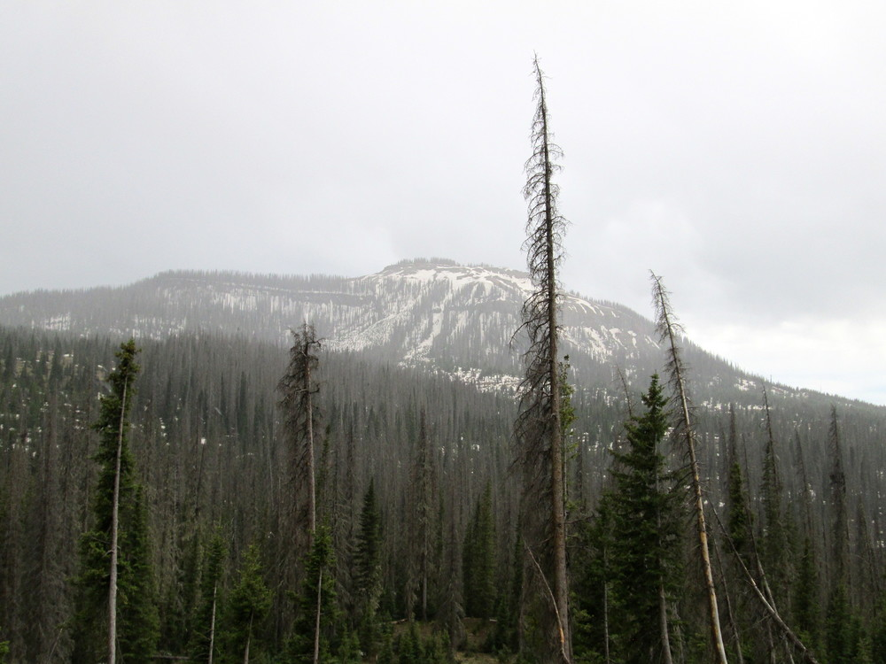 Below Wolf Creek Pass.  Photo taken at 9,600', looking southerly at 11,500' peak.