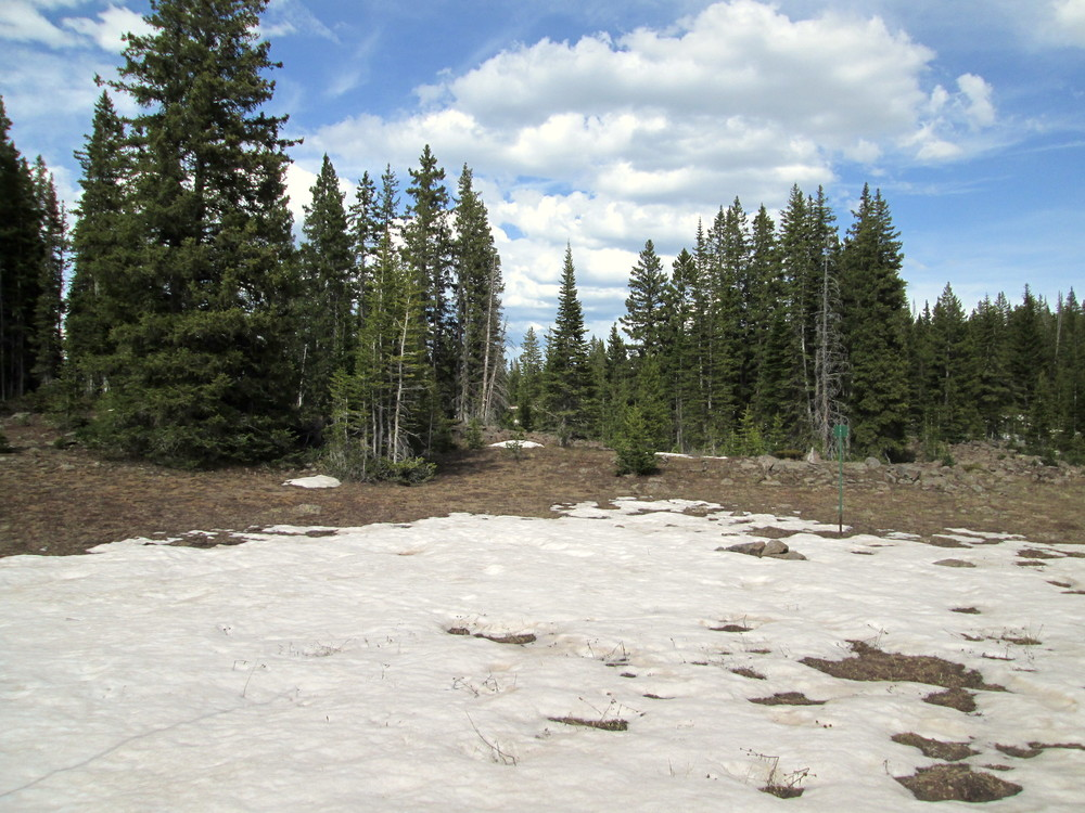 Grand Mesa CODOS sample area on June 7.  Photo shows where snow profiles are usually conducted.  An all-layers-merged sample was collected in this area.