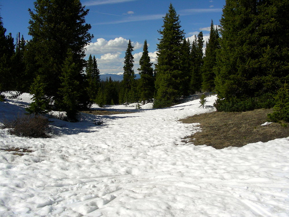Near CODOS sample area on Hoosier Pass on June 4.  Bare ground is showing itself in patchy patterns.