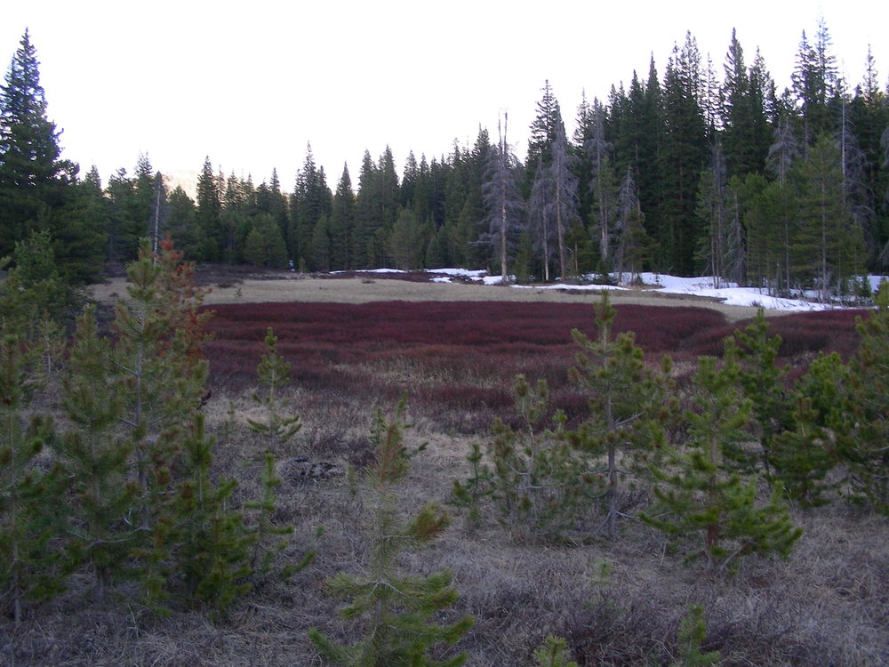 Willow Creek on May 14, 2018.  Snow all gone at sample site.  Forested areas retain some intermintent snow.