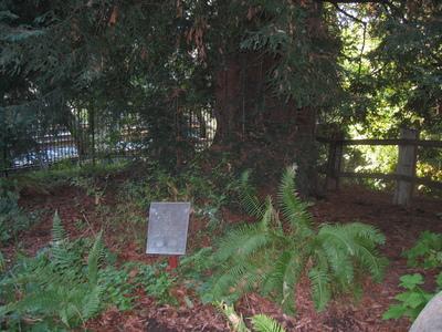 Image of El Palo Alto