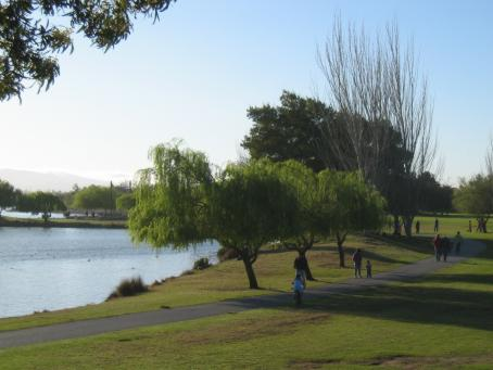 Image of Shoreline Park Trees