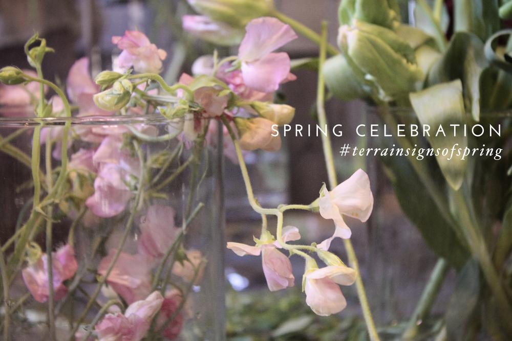 spring celebration party