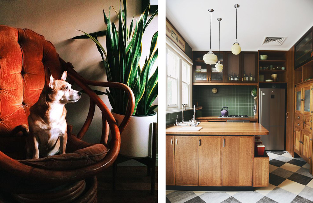 couplings no. 3 | dogs in the kitchen