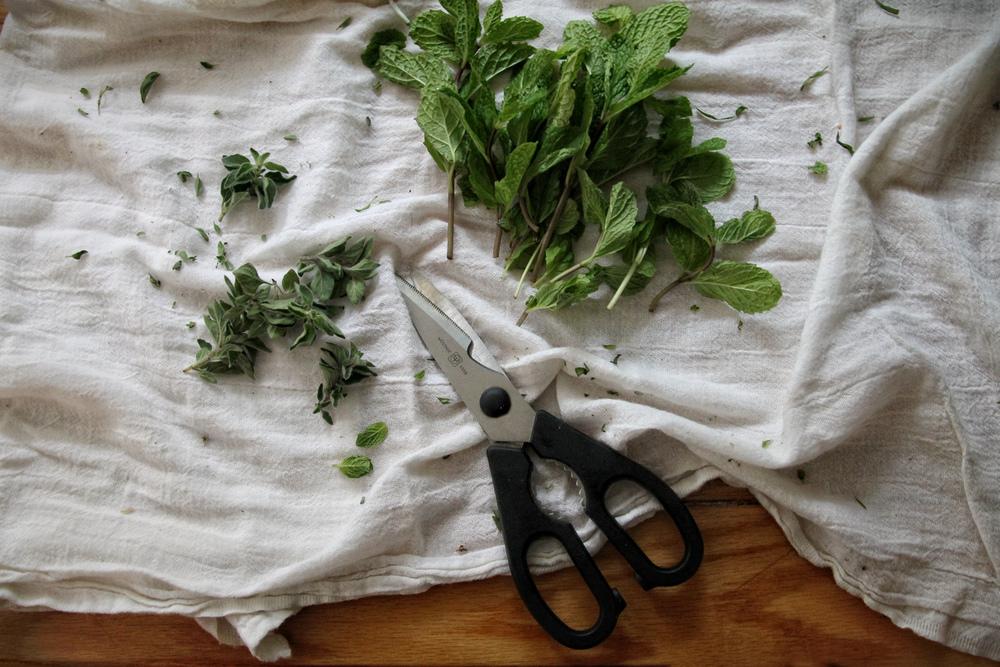winterizing herbs | bekuh b.