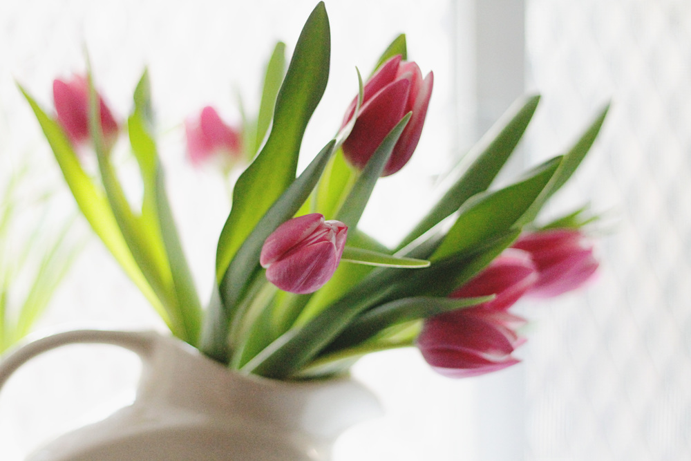pink tulips in the window sill | via: bekuh b.
