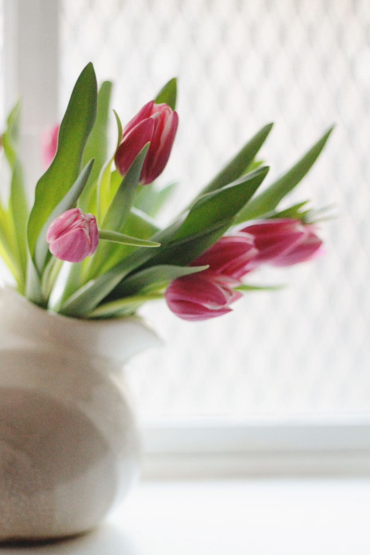 pink tulips on the window sill | via: bekuh b.