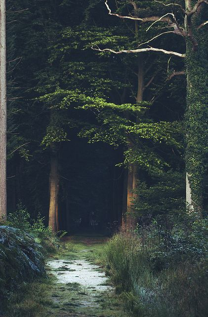 into the woods | photo by Mathijs Delva | image via: bekuh b.