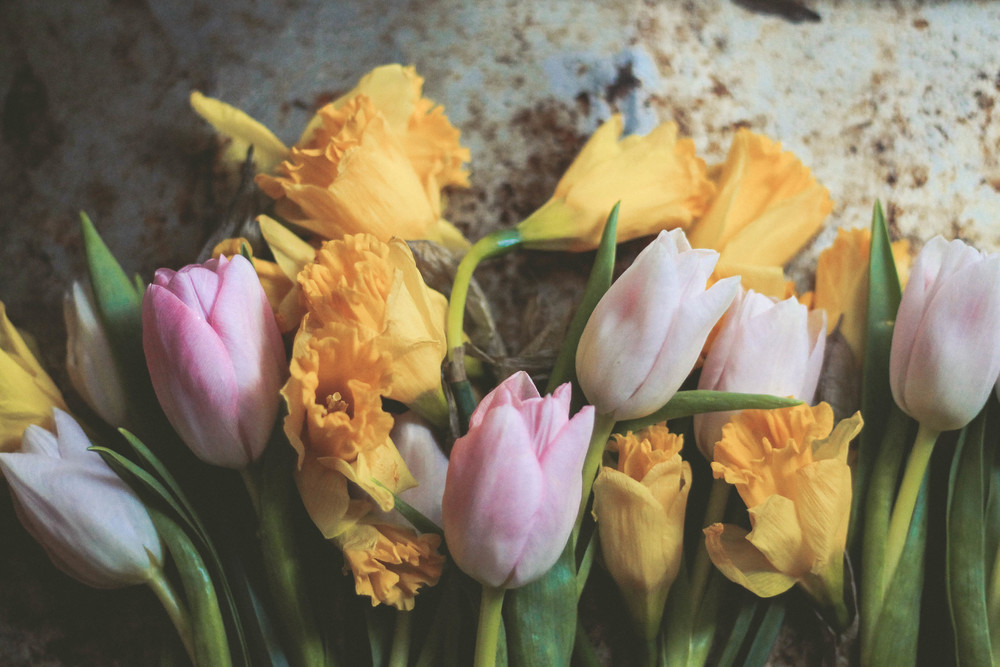 tulips and daffodils in spring | bekuh b.
