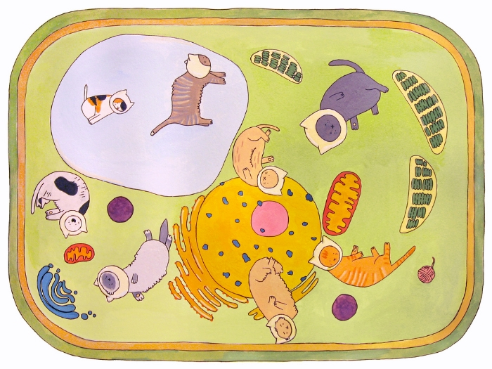 The Cat Cell Mitochondria