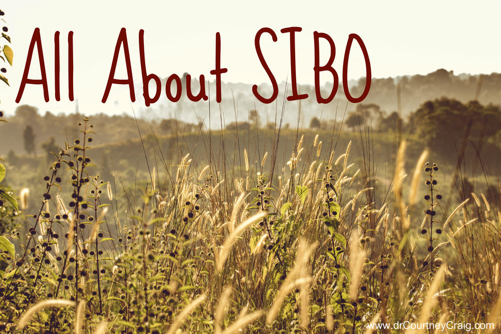 all about SIBO.jpg