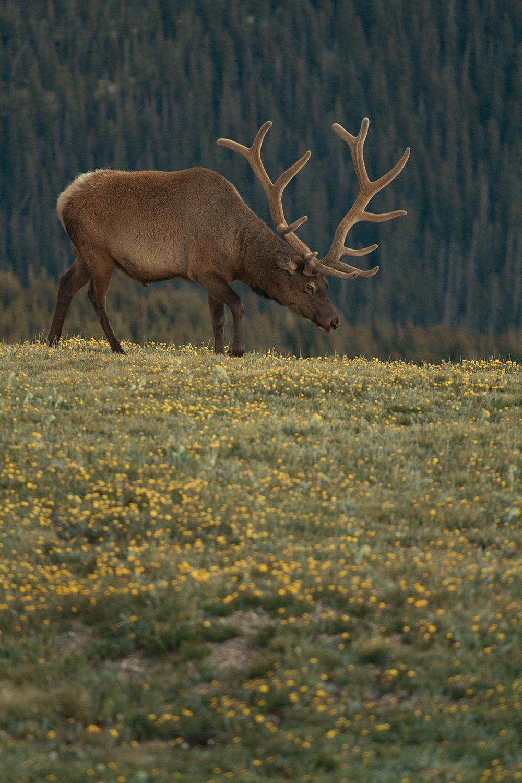 RhodesWeddingCo_Blog_Colorado_42.jpg