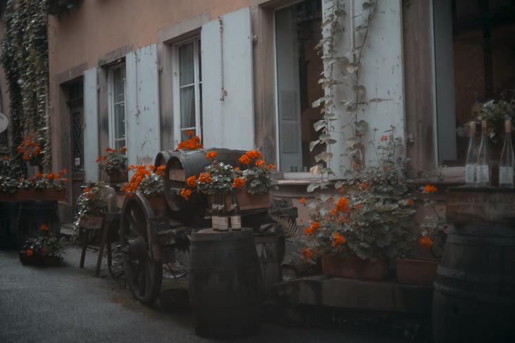 TravelandBloomRibeauville_097.jpg