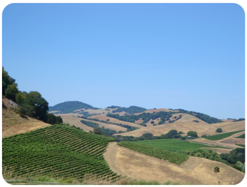 how to wine tour in sonoma in summer