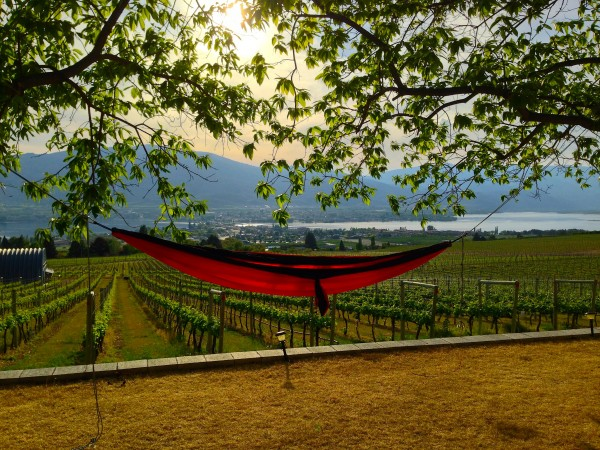 hammock wine country