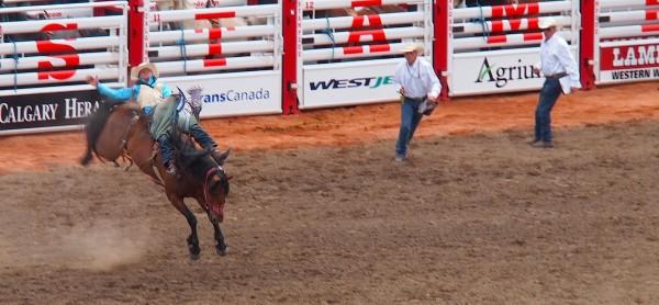 horse bronc calgary stampede