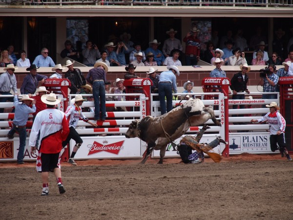 bull riding stampede 3
