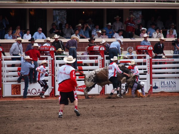 bull riding stampede 5