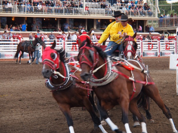chuckwagon racing calgary stampede