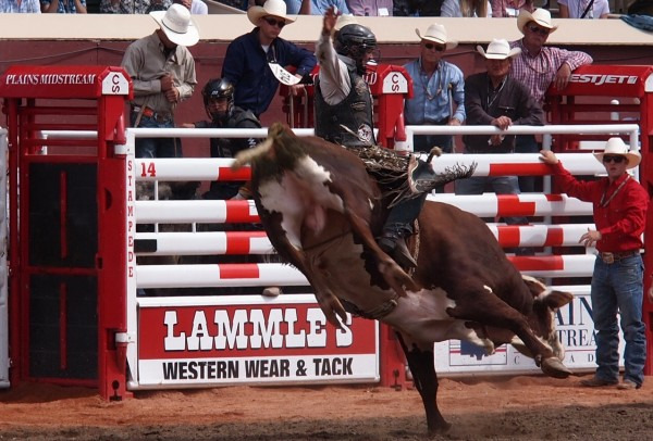 yahoo bull riding calgary stampede